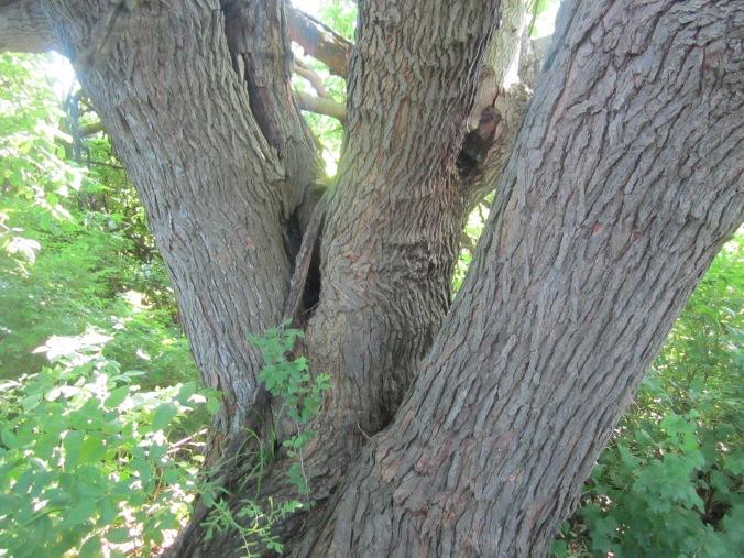 The big tree trunk