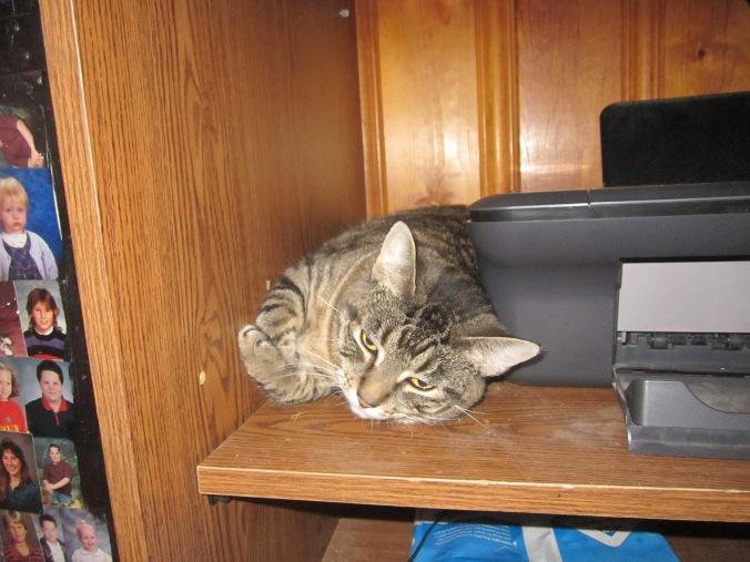 Adora hiding by the printer