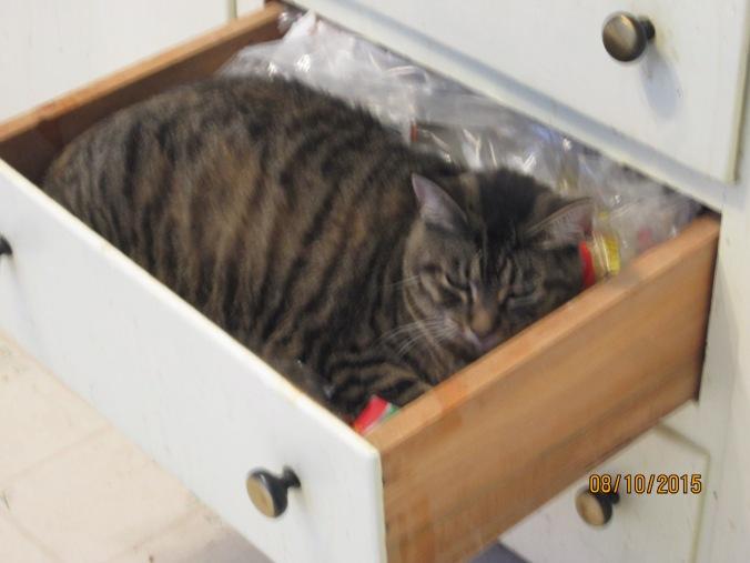 Adora in  the ktichen drawer